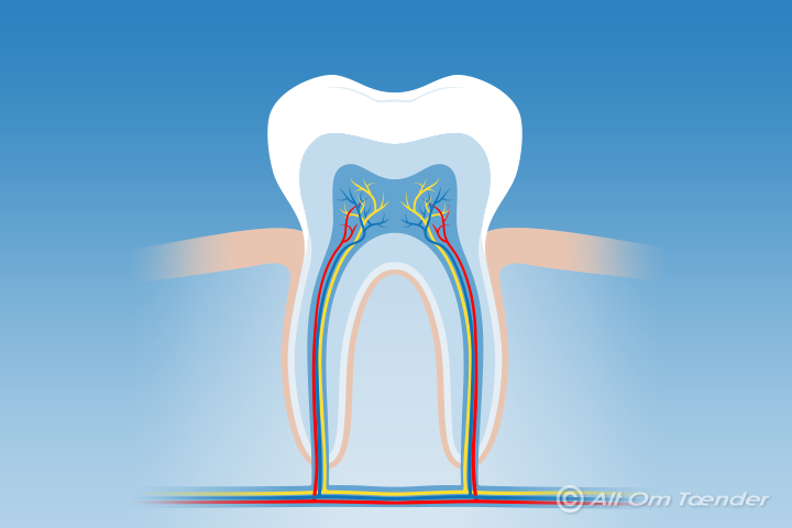 hvornår taber hvalpe tænder